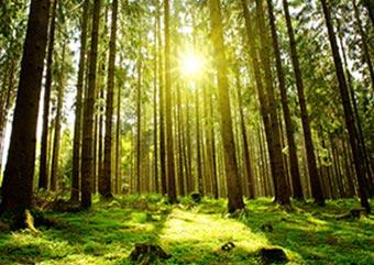 Regenerative Energien - Energie + Wärmetechnik Ebringen